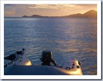 Seagulls and the setting sun