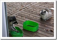 Pu'Yi and Raccoon