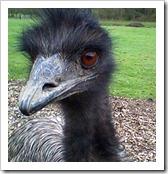 Emu_cropped