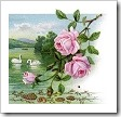 Rose_cropped