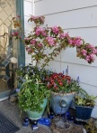 Our front porch, full of color