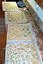 Sugar cookies, waiting to be baked